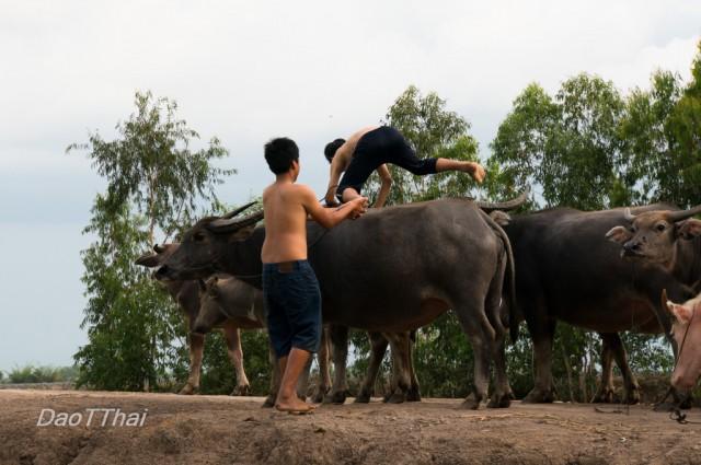 2015-daotrongthai-kientuong-19