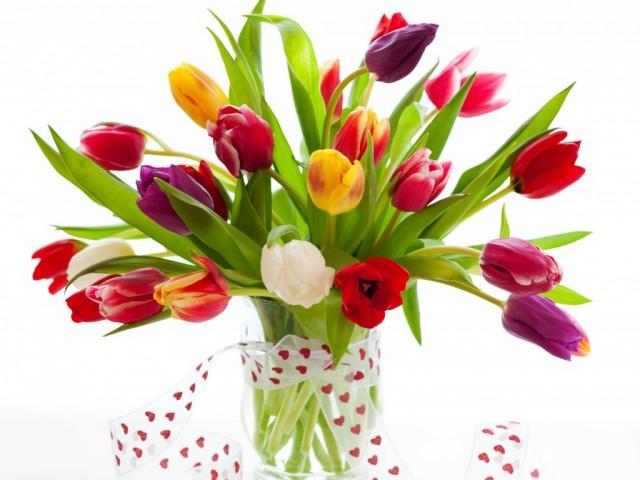Tulips-flowers-01