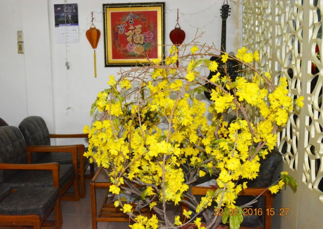160222-tetbinhthan-ramthanggieng-caymai-09_resize